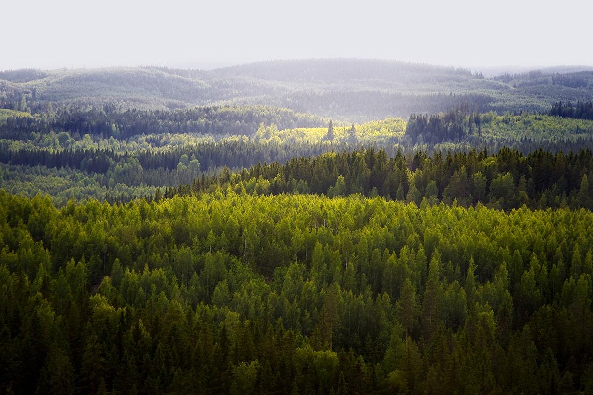 Metsäkuva